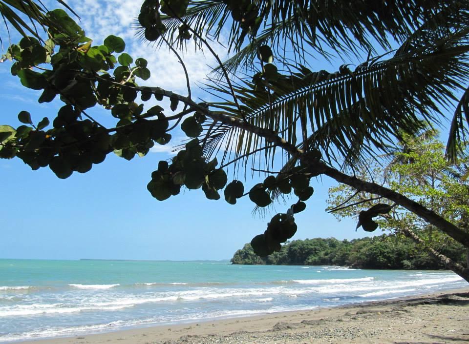Sea grape bush and coconut fronds