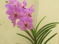 Zuleica's orchids