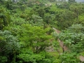 Lush mountain greenery