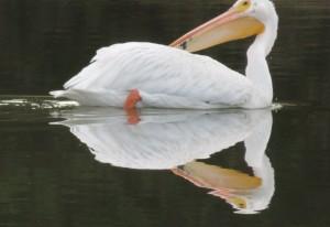birds sept14 013